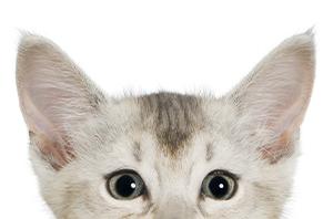 visuel chat detoure